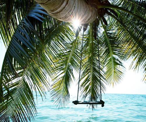 Palm tree swing over water