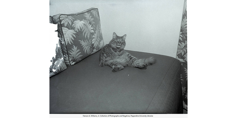 Picture of cat on a couch, circa the late 1940's